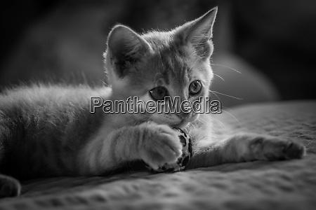 my little kitten portrait