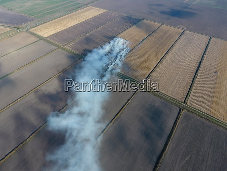 burning straw in the fields after