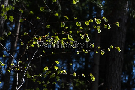 glowing green leaves in the sun