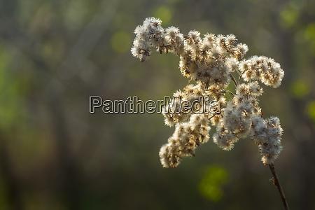 soft white blossom in the sun