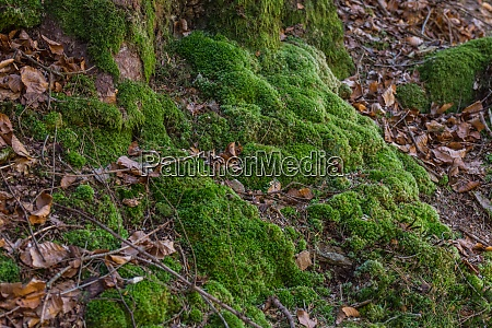 green moss in the forest while