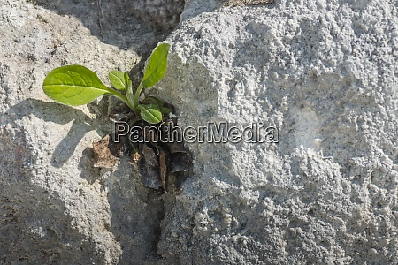 green plant on a rock crack