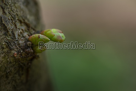 green sprout on a tree