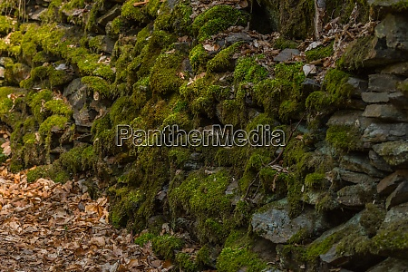 stones with green moss in the