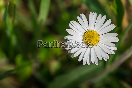 blossom daisy flower detail view