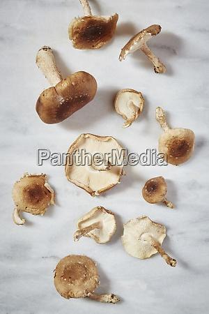harvested mushrooms on table