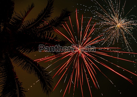 palm tree and firework display