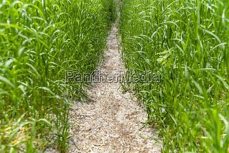 footpath through green grass