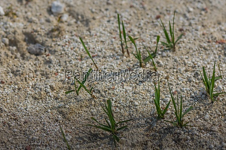 green blades of grass in the