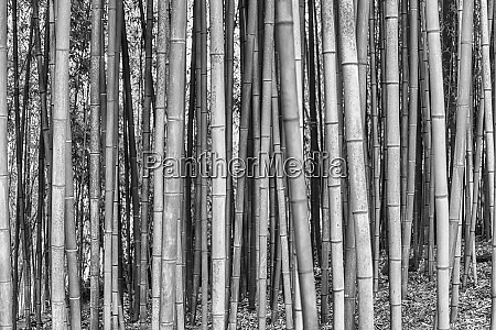 background with foliage pattern of bamboo