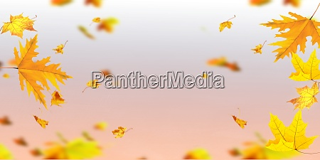 falling autumn leaves natural colour background