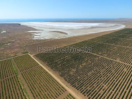 vineyards near the salt lake view