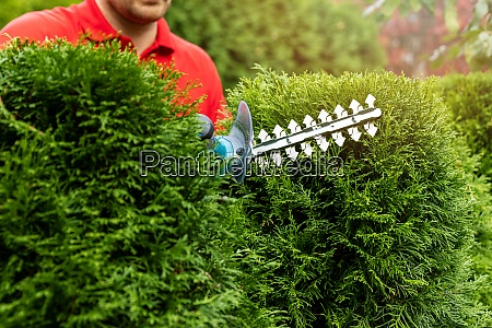 gardening services gardener trimming and