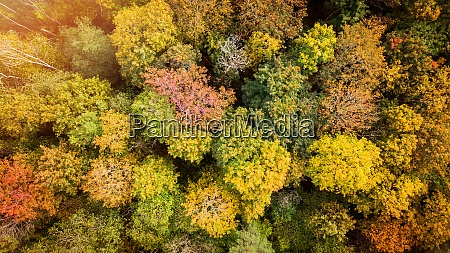 golden autumn fall forest trees aerial
