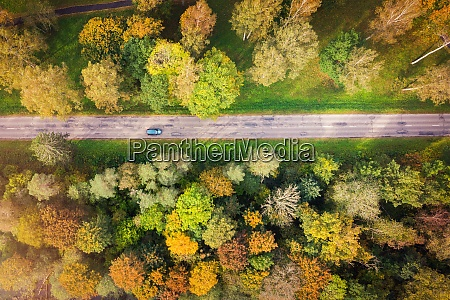 aerial view of forest road in