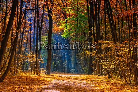 sunny autumn in the foggy park