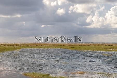 salt meadow near westerhever at high