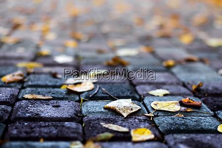 autumn leaves on a park avenue