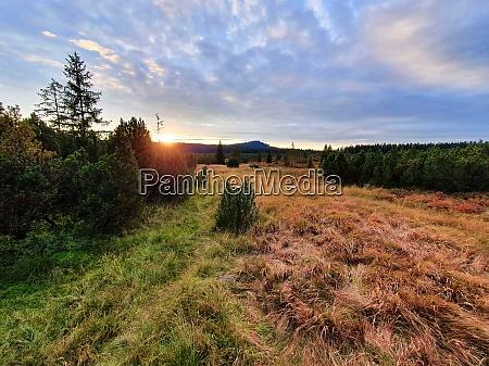 sunset over peat bog in sumava