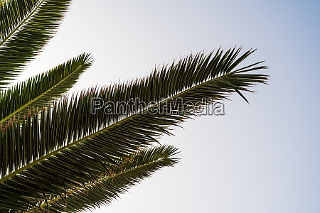 branches and leaves of palm trees