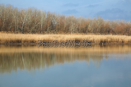 water surface with trees and reed