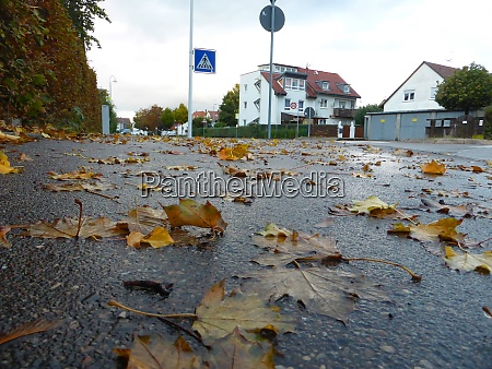autumnal colored leaves on a wet