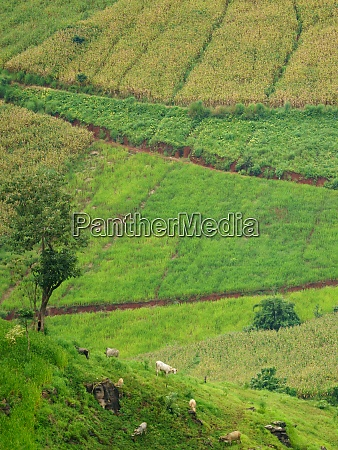 rural scene countryside at chiang mai
