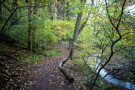 hiking path through autumn woods yellow