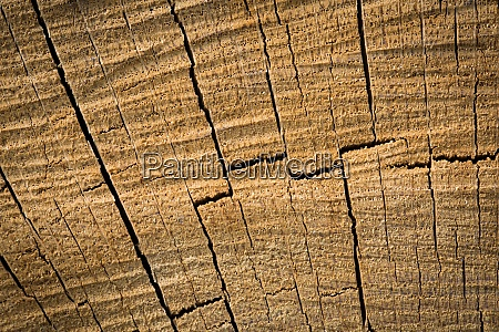 wood texture background surface natural wood