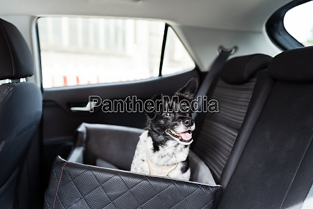 dog in car seat with safe