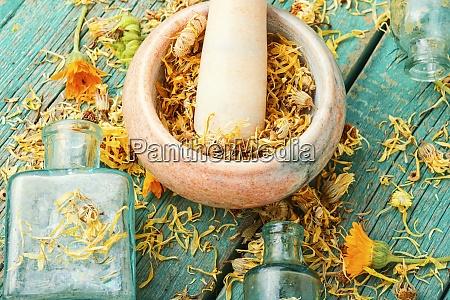 calendula for herbal medicine