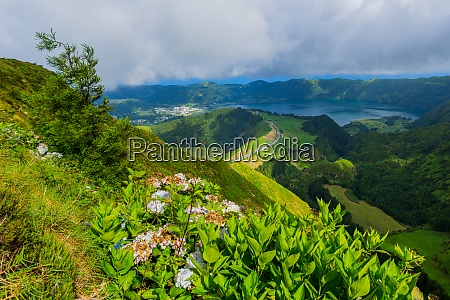 wild flowers in the mountain