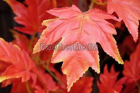 plastic leaves