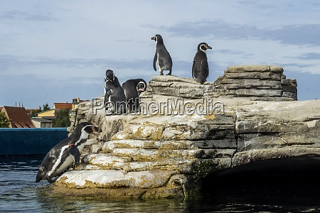 germany stralsund pinguins in the