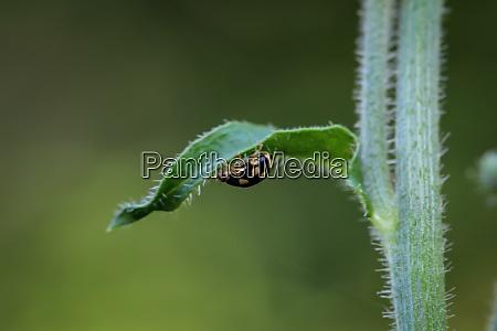 a black yellow ladybug runs under
