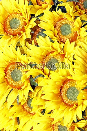 sunflowers detail