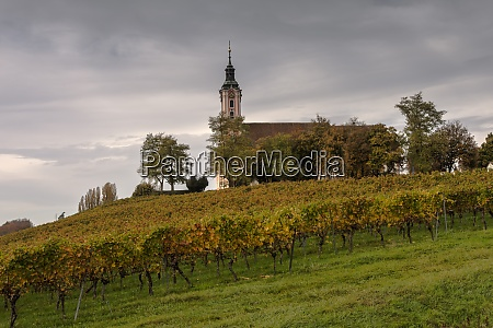 pilgrimage church birnau with grapevines in