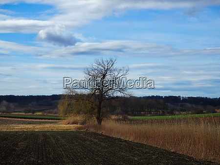 rural scene in autumn and cloudy