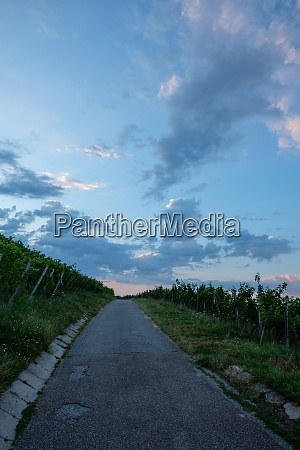 road in vineyard with clouds in