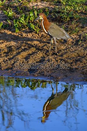 brazil pantanal 2019 24307
