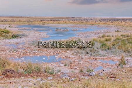 landscape namibia etosha game reserve
