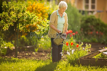 senior woman doing some gardening in