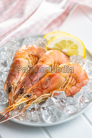 boiled tiger prawns with ice on