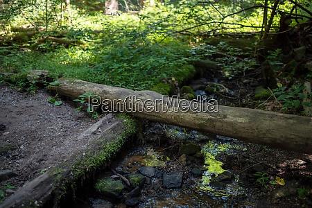 log footbridge over woodland stream reflecting