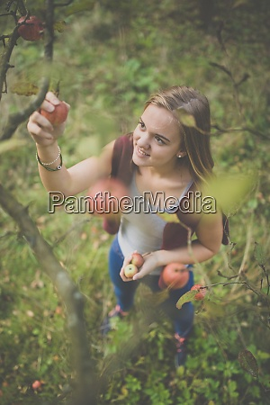 cute girl picking apples in an