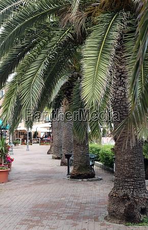 porto azzurro seafront with palm trees