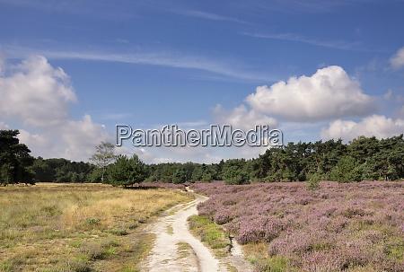 heathland near renkum