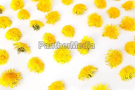 flowers seamless pattern dandelions summer concept