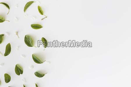 frame made of leaves on white