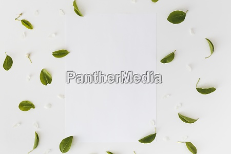 leaves and blank white card on